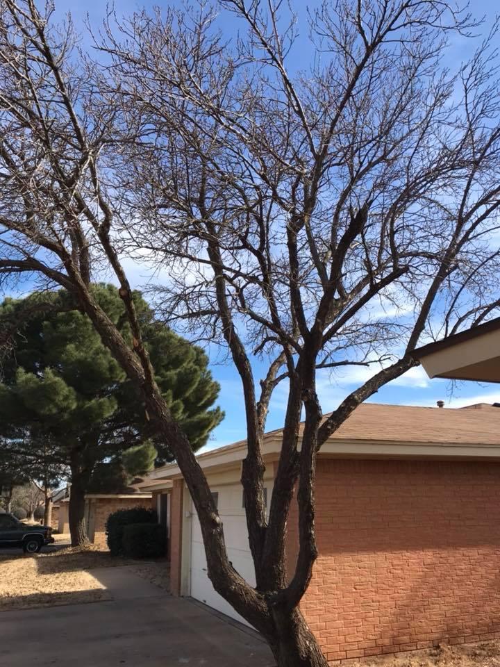 , Tree Service