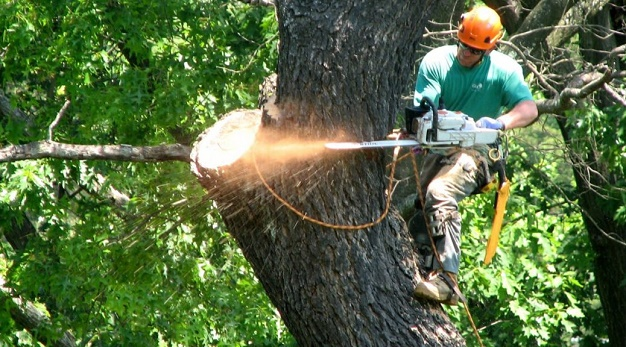 , Tree Removal